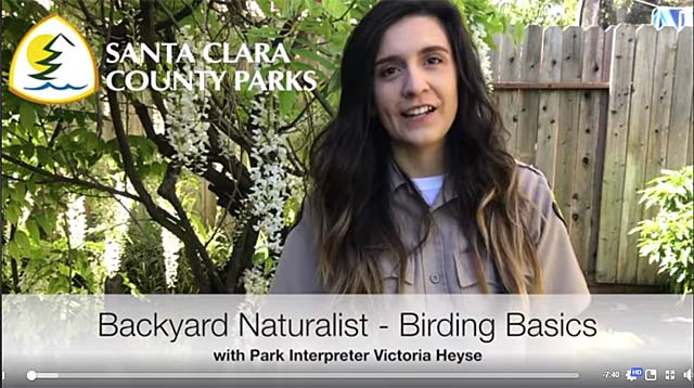 Backyard Naturalist Video