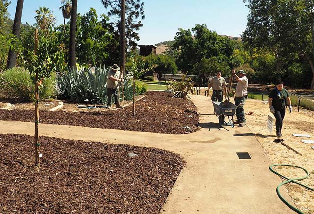 Mulch replacing grass at the Casa Grande 9/11/15